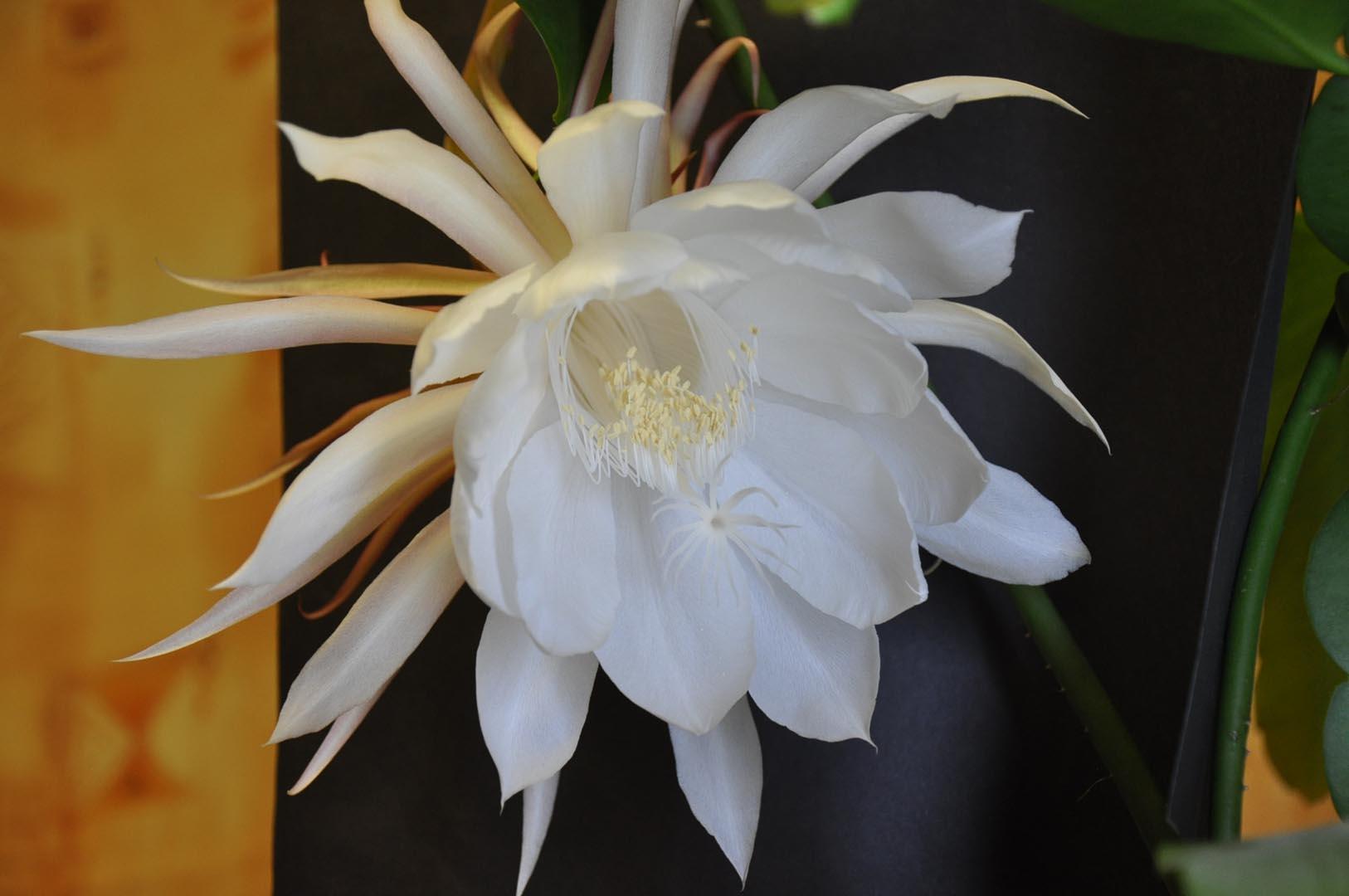 Květ vdetailu