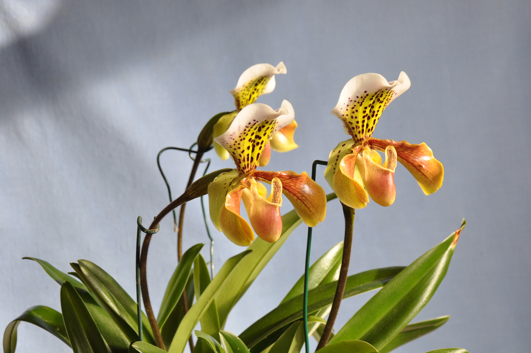 Tři květy